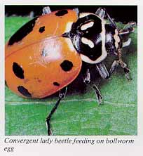 beetle in marathi
